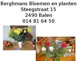 Banner_Berghmans